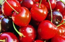 sweet_cherries