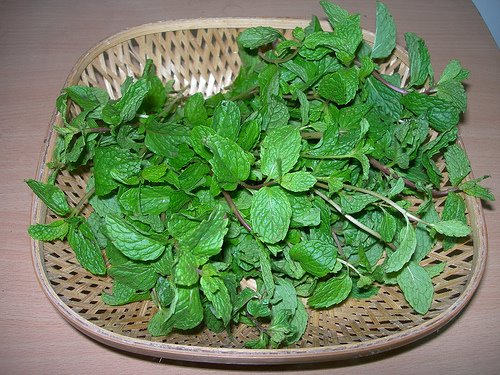 Image result for pudina keerai